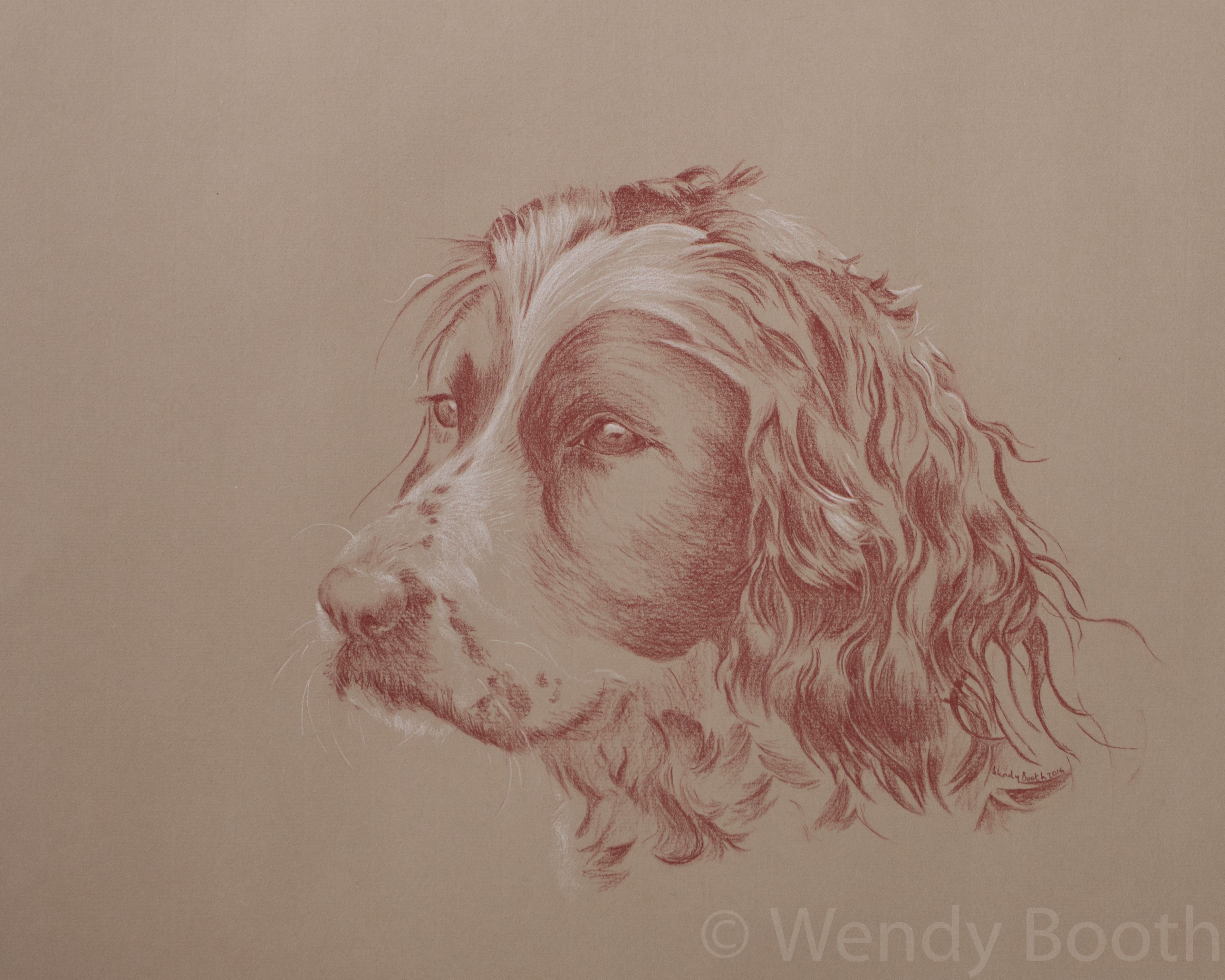 Pet Portrait Artist. So many waves and curls in this Spaniel's ears - but the reward is always worth the challenge.