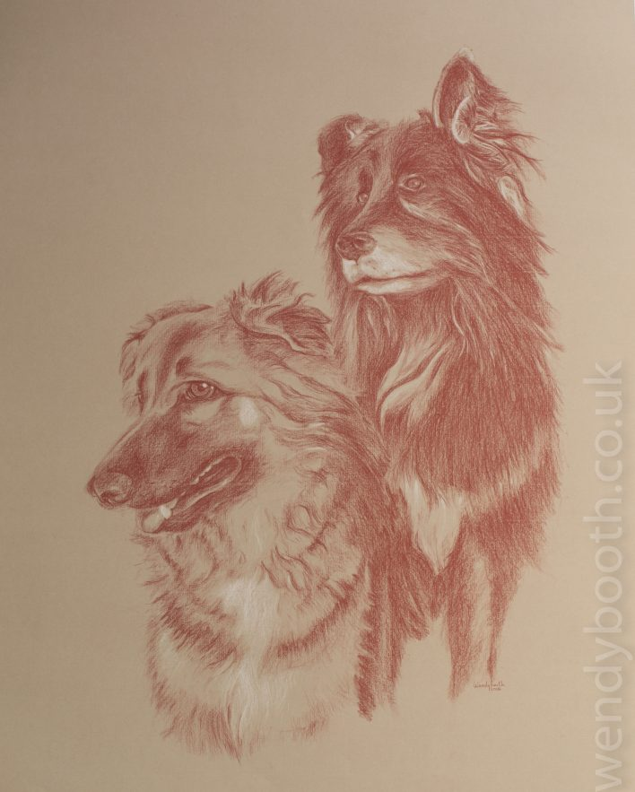 A gorgeous pair of dogs taken from several photographs including this gorgeous pose captured by the client.