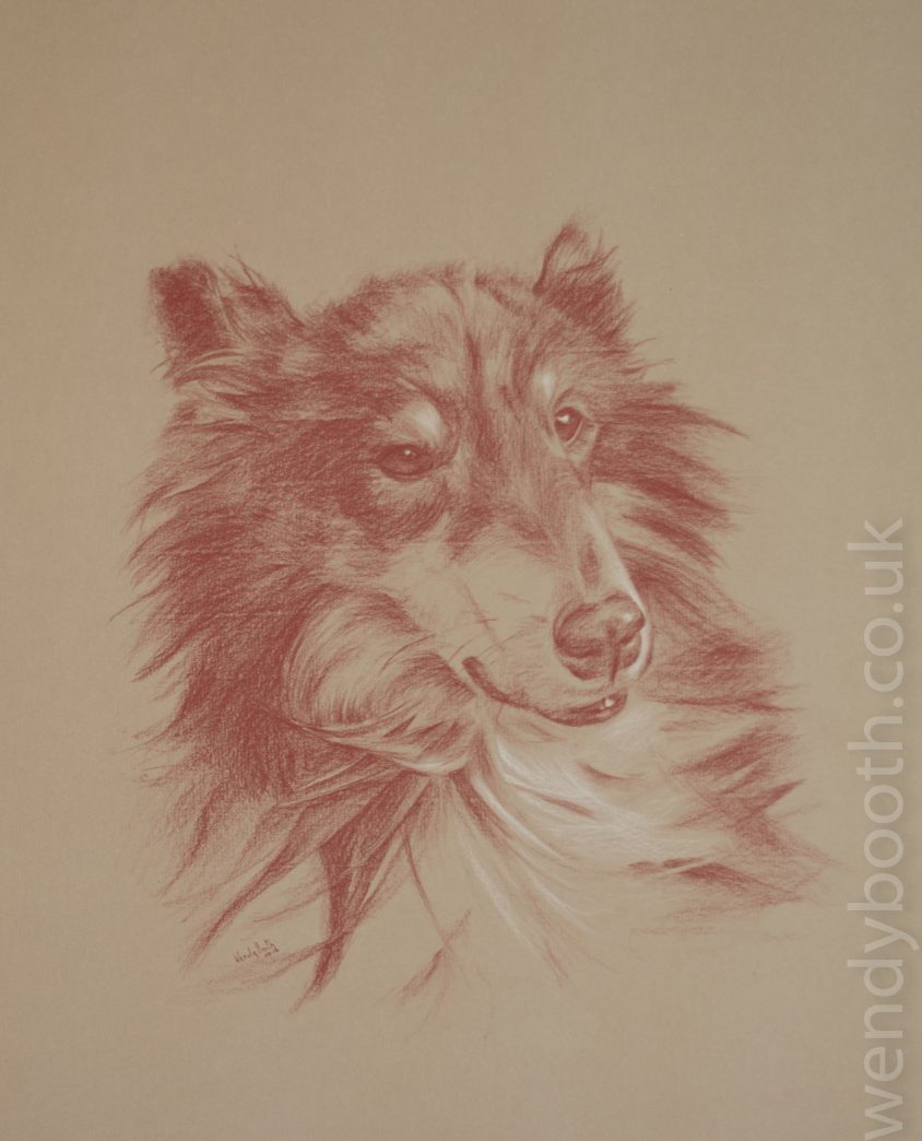 A beautiful dog with a challenging variety of textures. Portrait Commission
