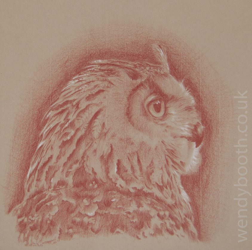 Amber eyes and downy feathers may look cute, but eagle owls are skilled predators.
