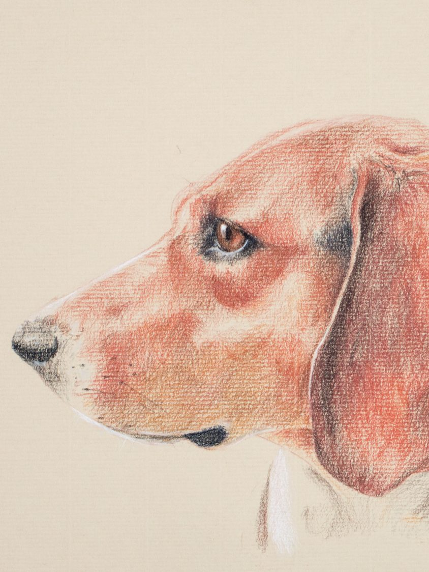 ALERT YOUNG DOG IN BRICK REDS AND OCHRES ON A SAND-COLOURED ROUGH PAPER